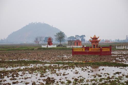 barren ricefields
