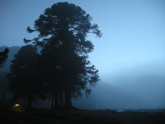 Amanece en Pulul (Mono Andes) Tags: chile mountain tree trekking landscape backpacking bosque rbol andes araucaria montaa 2008 campamento cordillera araucariaceae chilecentral cordilleradelosandes regindelaaraucana valledepulul turichile