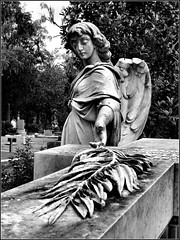 Bonaventure Cemetery 2 (ladyofthewings) Tags: bw cemetery graveyard georgia blackwhite naturallight gravestone savannah bonaventure olivebranch