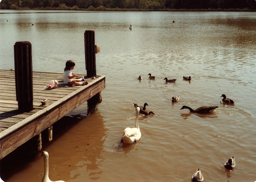 feeding ducks (by mintyfreshflavor)