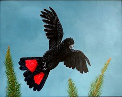 Redtailed Black Cockatoo (jennie-robyn) Tags: bird art birds acrylic cockatoo australianbirds australiannative redtailedblackcockatoo anawesomeshot australianwildlifepaintingoriginal