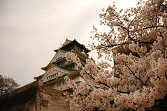 sakura 2008-8s (.:Oriental _ Spaghetti:.) Tags: japan cherry grande cherries blossom blossoms dal fabio sakura osaka 2008 giappone fioritura cigliegio cigliegi