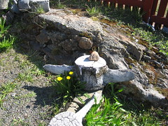 Sommer p hjskolen (barfussruge) Tags: greenland grnland sisimiut knudrasmussenshjskole