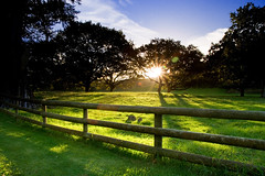 Evening Sunshine (Chris Gin) Tags: park trees sunset newzealand sky sun sunlight nature grass fence cornwall shadows hills auckland nz cubism supershot mywinners worldwidelandscapes