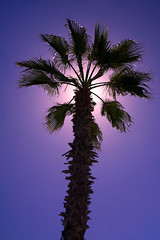 Tropical Eclipse (WisDoc) Tags: canon mexico eclipse cabo bravo palm palmtree tropical cabosanlucas wisdoc