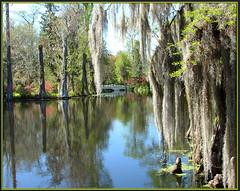 Past Vacation (glenda.suebee) Tags: trees lake sc moss colorful 04 charleston explore spanish 230