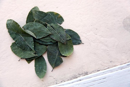 Nice Green Coca Leaves