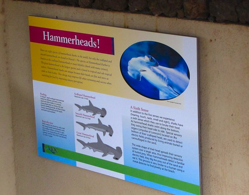 know your hammerheads!