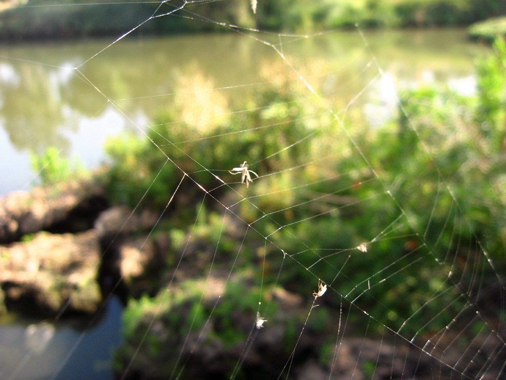 04-06-2011-caught-in-web