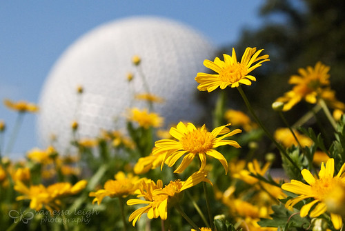 Spaceship Earth Bokeh
