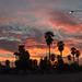 Phoenix Neighborhood