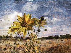 flowersss 'n cloudsss XX v2 (Vlahaha) Tags: flowers blue autumn sky italy nature yellow clouds vignetting naturalmente lanouvellerevolutionsurrealiste independentphotos seasunclouds