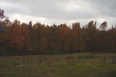 111207 Fall Color - Landscape