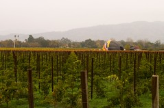 Landed (lefeber) Tags: california rainyday rows napavalley hotairballoon filmshoot winecountry mathew grapevines thedarkages castellodiamorosa