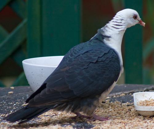 Bird Of Mystery