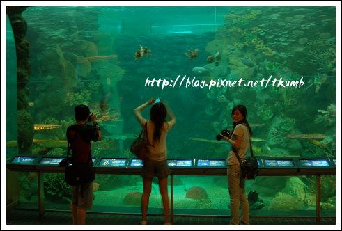 澎湖水族館 (5)