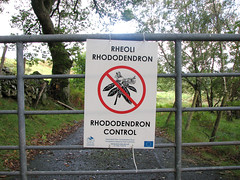 Rhododendron control