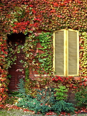 Herbst (Harald52) Tags: laub herbst halle saale frbung