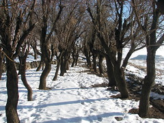 08-Karkas (Amin Eftekhari) Tags: winter mountain iran  esfahan   karkas natanz    betterthangood