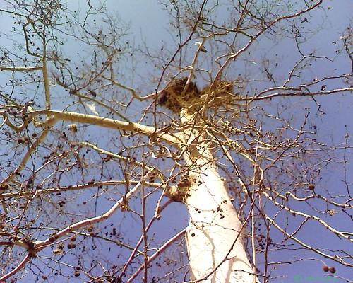 Trees & Storks