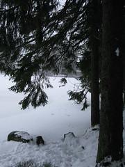 Bume am Mummelsee (kimberley1979) Tags: schnee snow see neige schwarzwald mummelsee freudenstadt streg lauterbad kurhotellauterbad