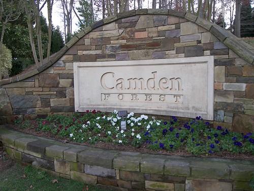 Camden Forest 047