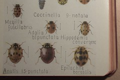 Fieldbook of Insects - Plate LXXV detail
