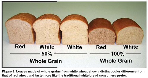 soft wheat background wheat red vs white spring vs winter the fresh loaf