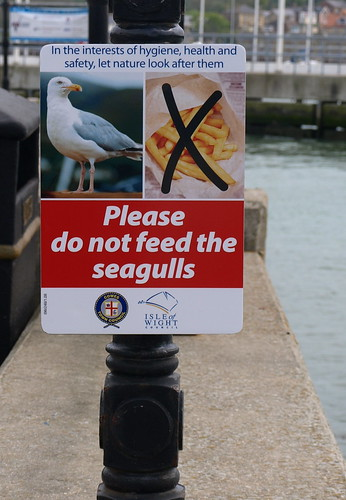 gulls yes, chips no.