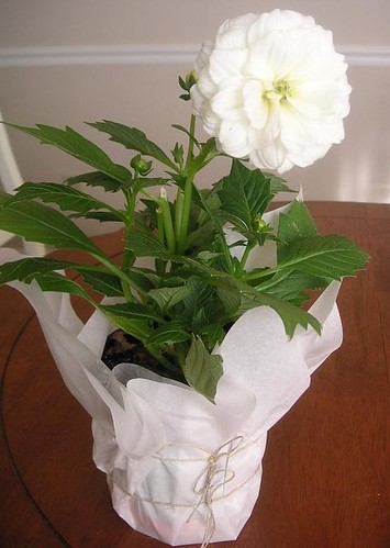 Potted plant wrapped example
