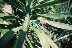 (fisalis) Tags: casa jardim littlecreatures santoamaro caador forasmicroscopicas dinossaurus