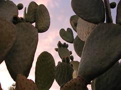 cactus this morning (Neshamah Spirit Art) Tags: morning arizona cactus sky desert heart tucson nicoleraisinstern tortugadeldesierto