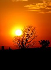 Las ramas del árbol que juegan con el Sol (mexicois) Tags: sunset atardecer soleil autopista platinumphoto jugandoconelsol enelcarrodeisaías