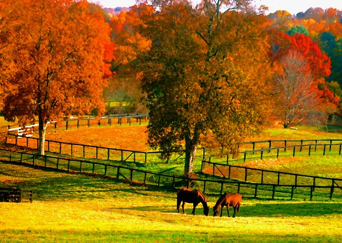 Image result for fall horse pics