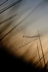 unbenannt-10 (spreeliebe) Tags: autumn berlin weather canon deutschland eos flora wasser herbst natur pflanze gras tau sonne sonnenaufgang morgen deu wassertropfen tautropfen spinnennetz digitalphotography koepenick graeser altweibersommer herbstlich herbstzeit witterung erpetal kleinbild 400d canoneos400d digitalfotografie