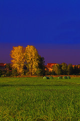 loud colors (Matthias Hilf) Tags: autumn zeiss germany photography 50mm minolta 14 vivid matthias dynax7d 2007 planar hegau 5for2