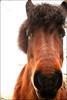 RastaHorse (Day_C) Tags: horse animal fur dayc afro oostvoorne fro rasta paard haar vacht paardenhoofd poedelpaard edeldier