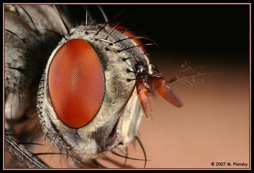 Fly Eye Guy