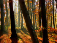 light mist in an autumn forest (MyOakForest) Tags: autumn sunlight mist forest herbst wald soe dunst sonnenlicht 10faves 25faves golddragon mywinners anawesomeshot aplusphoto diamondclassphotographer theunforgettablepictures colourartaward thegoldenmermaid thegardenofzen top20autumn
