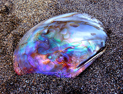 Abalone Shell (tropicaLiving - Jessy Eykendorp) Tags: bali beach nature indonesia geotagged photography asia shell panoramic kuta flickrsbest firsttheearth tropicaliving tropicalivingtropicallivingtropicalliving panasoniclumixdmcfz8panasoniclumixdmcfz8 jessyce geo:lon=115157318 geo:lat=8817225