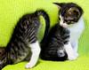 Brotherhood (renata_souza_e_souza) Tags: cute topf25 topv111 topv2222 cat interestingness interesting olhar topv333 kitten funny brothers 10 lol topv1111 small topv999 favorites gatos olhos gato topv777 olho posers 20 popular topv3333 fofo fofos supershot 20favorites animaisdeestimacao animaldeestimacao 30favorites abigfave kissablekat bestofcats eliteimages betterthangood prrrfectcats