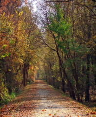 The Katy Trail (linda yvonne) Tags: katytrail recreationalpath 200beautifulmiles soworthit wishihadmoretimetophotograph fallcolor i500 interestingness470