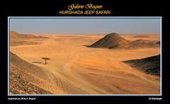 HURGHADA JEEP SAFARI (Albert ☺ bognerart.eu) Tags: sahara geotagged photo foto sonnenuntergang desert albert dune egypt camel desierto egipto duna ägypten egitto bah hurghada düne kamel wüste deserto bedouin désert Ägypten beduini cammello hamada beduino égypte mısır jeepsafari bogner beduíno iso80 sanddüne çöl hammada beduinen pustinja camélido bédouins egipat camélidé sandwüste diamondclassphotographer albertbogner bognerart standardbrennweite ev14 artmemberssalzburg colors100000 bognerartcommentedpictures bognerartprizesmedalsandawards bognerartothersfavorites steinwüste alghardaqah felswüste rgb170140110 albahralahmar gouvernementrotesmeer muhafazatalbahralahmar alghurdaqah algurdaqa ilgardaga ilgurdaga geo2734 redseagovernorate Αίγυπτος mannaitours geo270337 geo27043366 geo27038413365542 desertodosaara Βεδουίνοι 1000bestplacesonearth