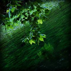 Narcissism (Yorick...) Tags: reflection tree green leave river mirror leaf stream narcissism superbmasterpiece excapture obliquemind obliquamente