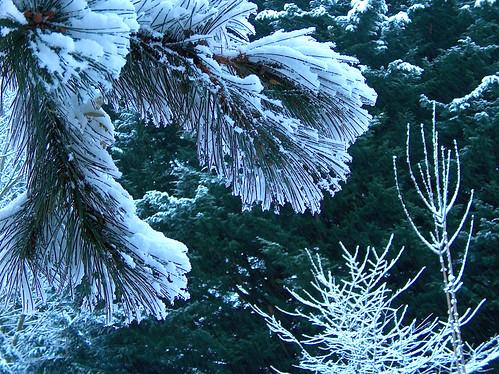 I-Pine Snow