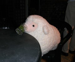Thirsty sheep