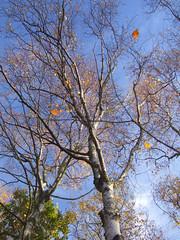 Skipwith 03Nov07 090 (josies photos) Tags: autumn yorkshirewildlifetrust