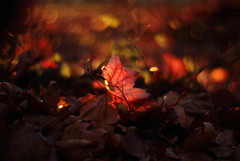 relic (futureancient) Tags: autumn leaves 50mm dof bokeh dreamy f095 canonf095 leicam8 futureancient