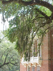 04 Side View of Longwood - Natchez, Mississippi (sunnybrook100) Tags: windows mississippi balcony spanishmoss natchez mansion antebellum longwood adamscounty octagonhouse