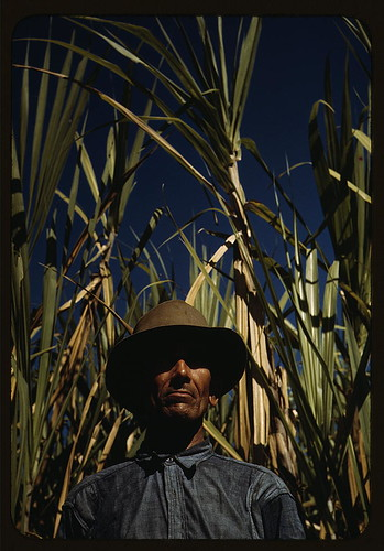 FSA borrower who is a member of a sugar cooperative,  vicinity of Rio Piedras,  Puerto Rico (LOC)